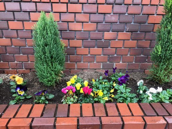 ピアノ教室に、生徒さんをお迎えするお花を冬バージョンに変えました
