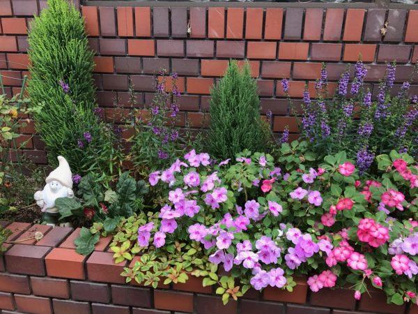 生徒さん達をお迎えする花壇を夏バージョンに
